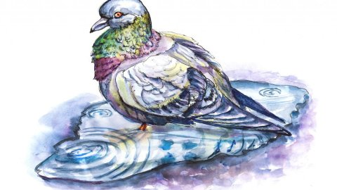 Day 12 - Pigeon In A Puddle Watercolor Sketch - Doodlewash