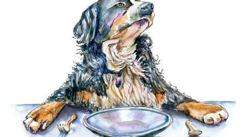 Day 20 - Bernese Mountain Dog Watercolor Illustration - Doodlewash