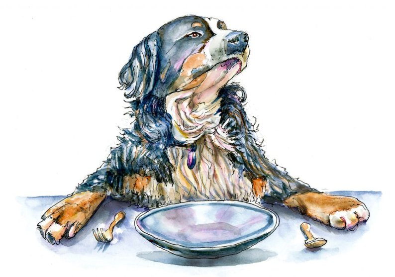 Day 20 - Bernese Mountain Dog Watercolor Illustration - Doodlewash