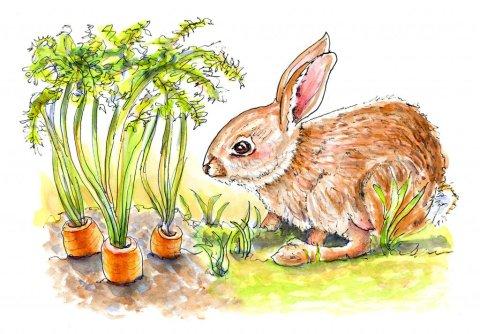 Day 26 - Bunny Rabbit Carrots Watercolor - Doodlewash