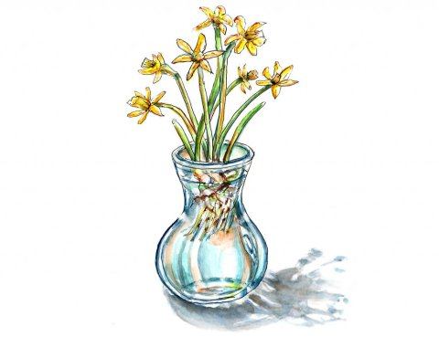 Day 29 - Daffodils In Vase Watercolor Illustration - Doodlewash