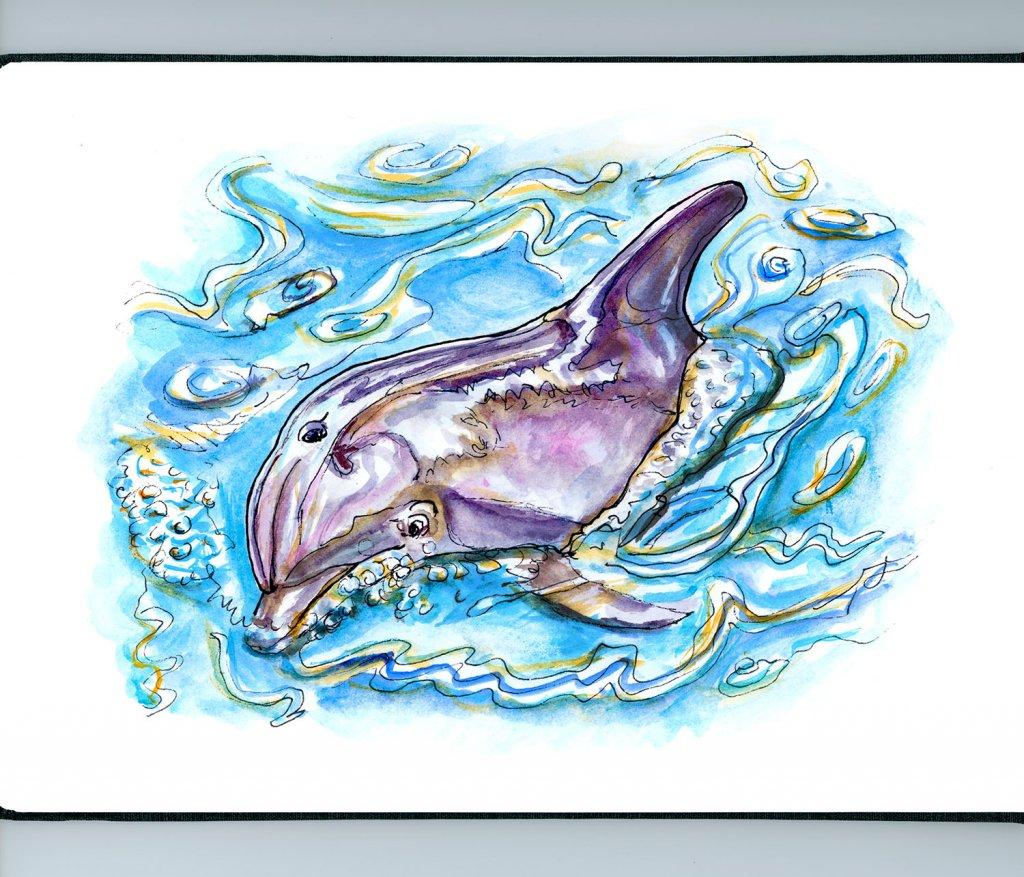 Dolphin Watercolor Illustration - Doodlewash