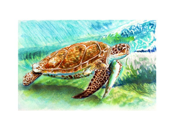 Sea Turtle Watercolor Print Detail