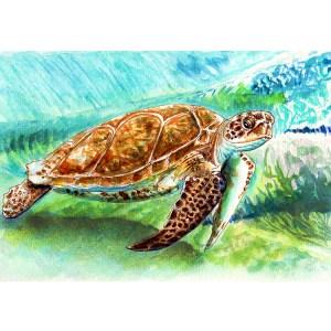 Sea Turtle Watercolor Print Detail