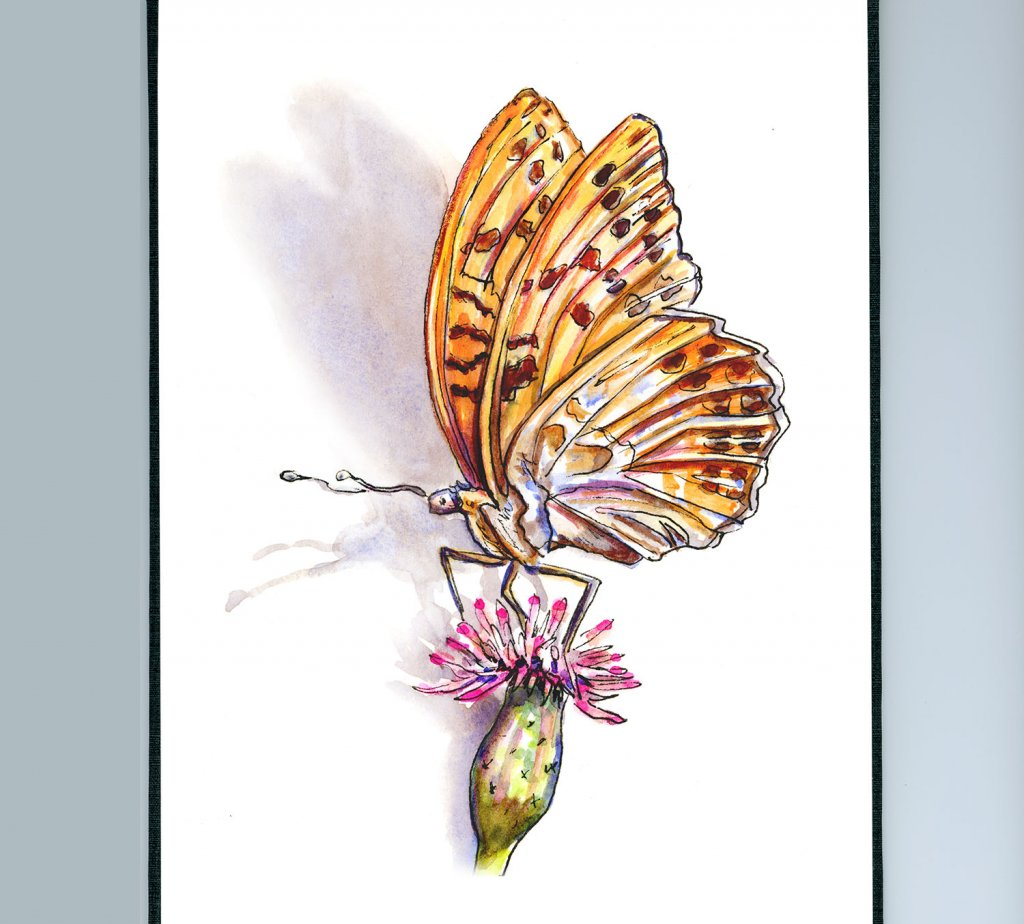 Day 24 - Butterfly Watercolor Illustration - Doodlewash