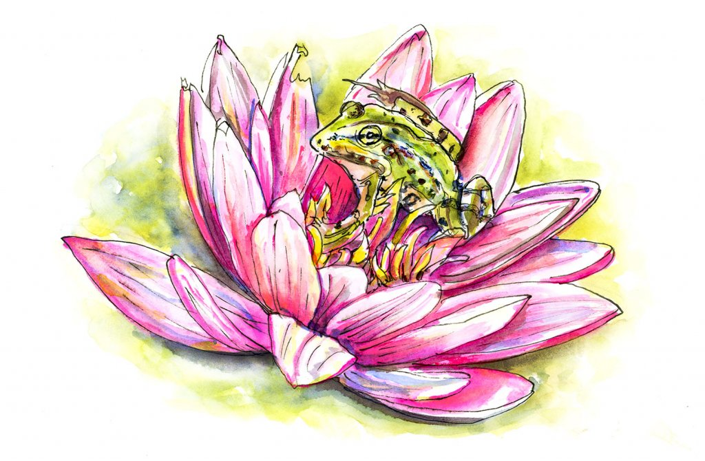 Frog Lotus Flower Illustration - Doodlewash