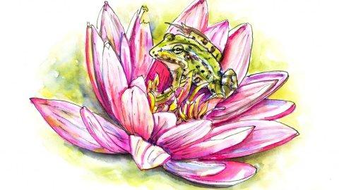 Frog Lotus Flower Illustration - Doodlewash