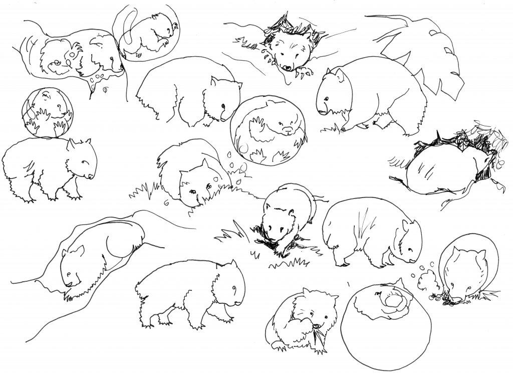 Character Sketches - Wombat - Sandra Strait - Doodlewash
