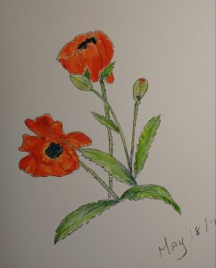 My first attempt at submitting a pen/ watercolor sketch using poppies from my garden. They kept movi