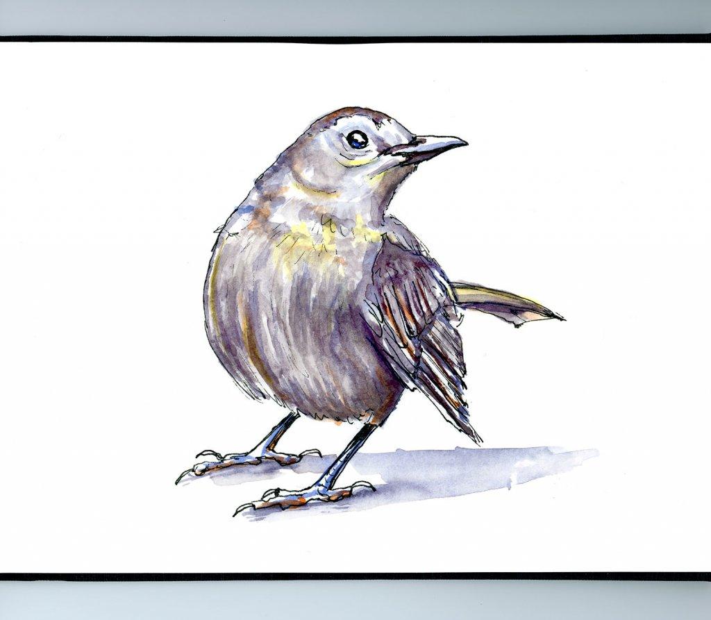 Day 10 - Grey Bird Watercolour Illustration - Doodlewash