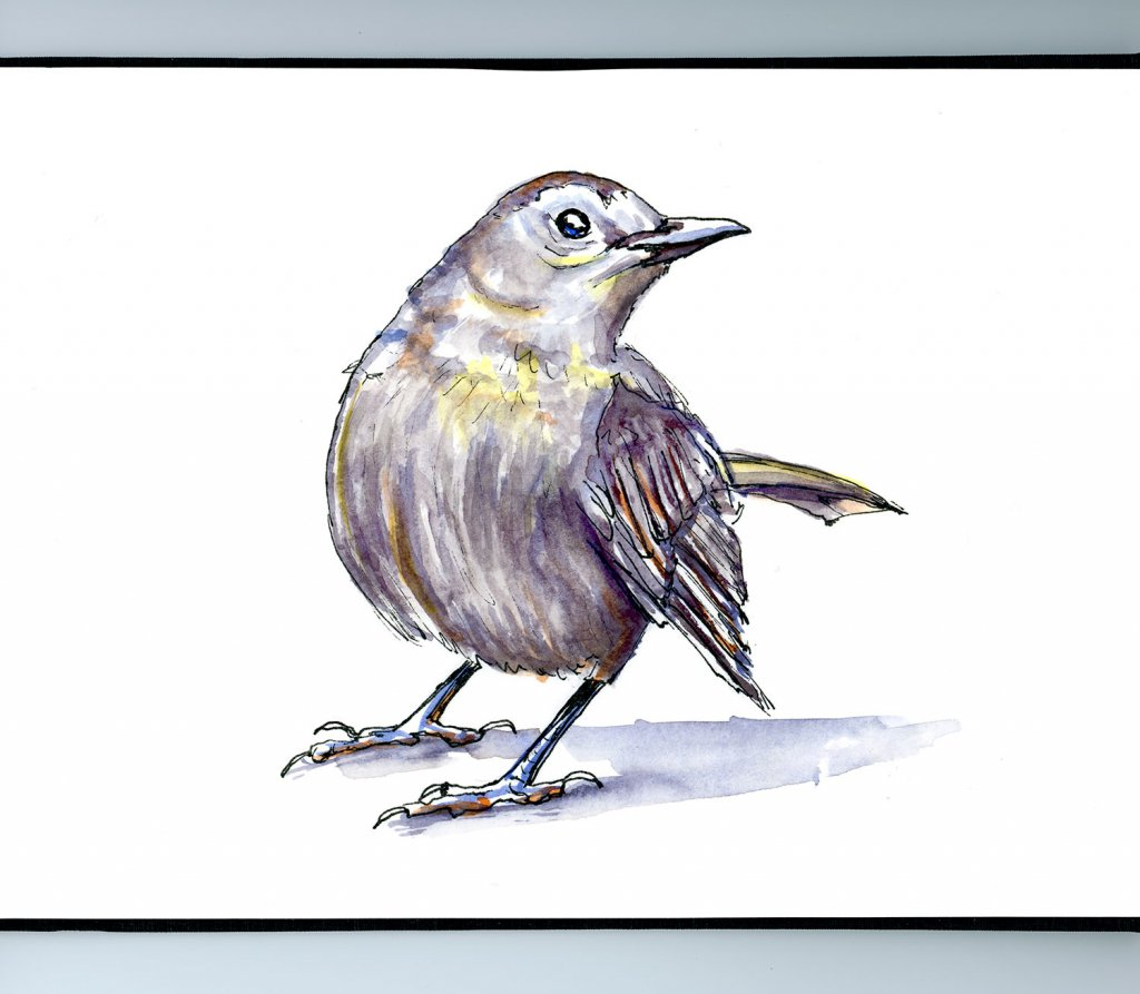 Day 10 - Grey Bird Watercolour Illustration - Doodlewash