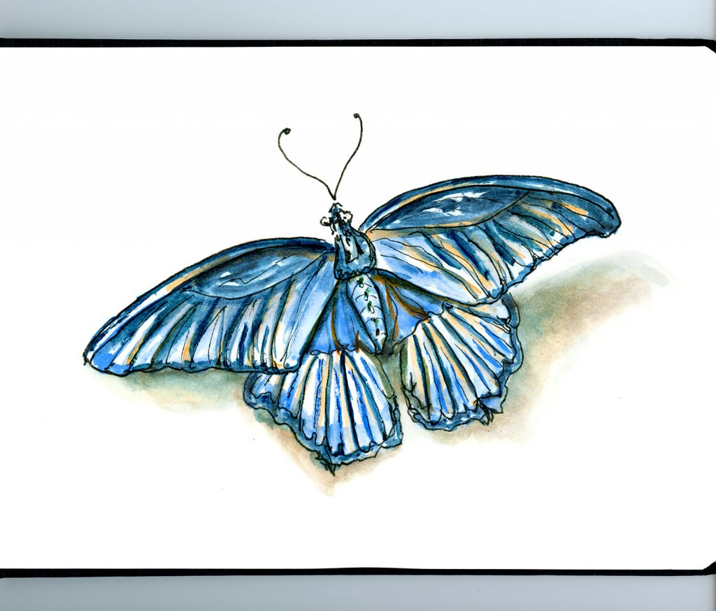Day 12 - Blue Butterfly Illustration - Doodlewash