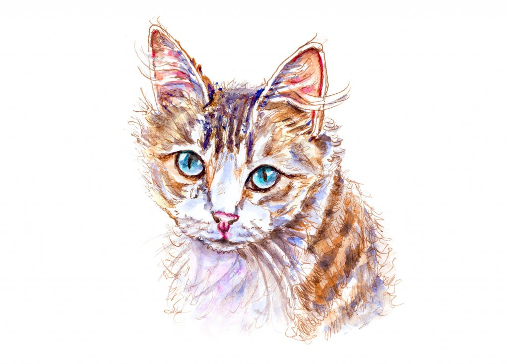 Cat Blue Eyes Watercolor Illustration - Doodlewash