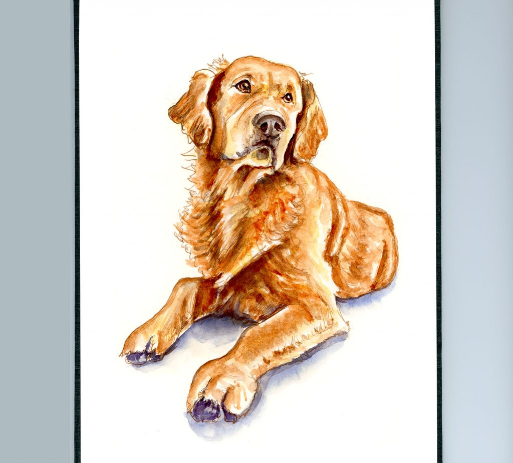 Day 23 - Golden Retriever Watercolor Illustration_IG