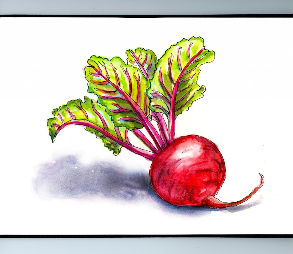 Day 31 - Beet Red Watercolor Illustration_IG