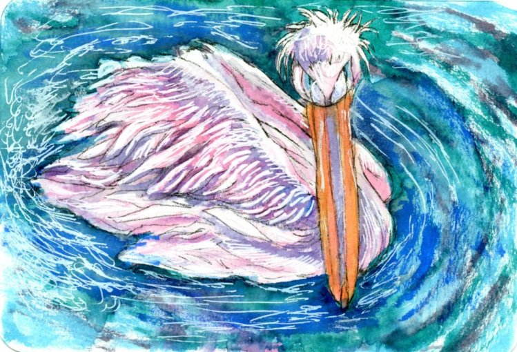 prompt 'Tickled Pink'. I chose the Great White Pelican for the prompt because during the