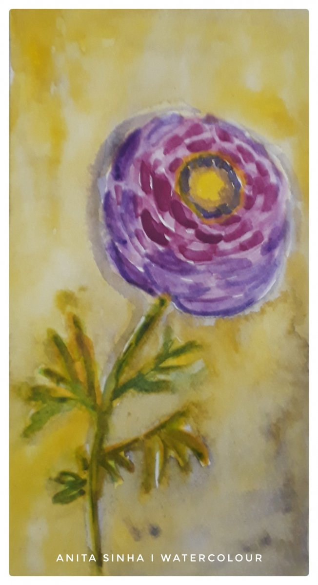 Day 27 – May colour challenge : Purple heart. The purple Ranunculus flower. #doodlewashMay2019
