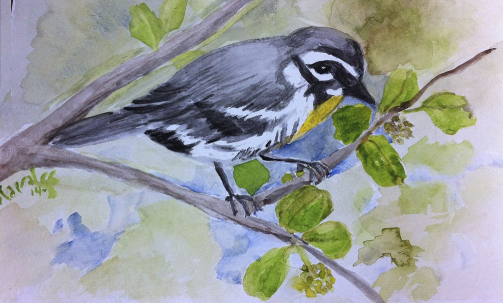 Warbler Watercolor Painting by Karalee Hammes - Doodlewash