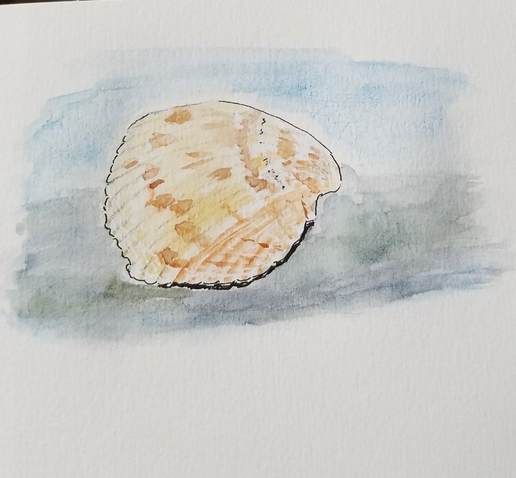 To celebrate the start of June here is my seashell that sits above my fireplace. It is dreaming of i