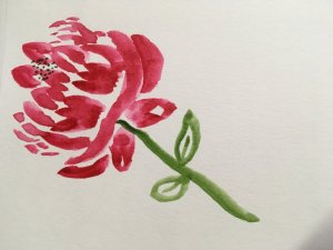 Practicing Peonies. 59844E34-9FF7-4CCE-9541-7C3FA89D4B67