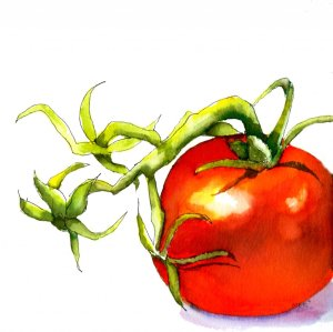 6/18/19 Tomatoes A friend gave me a set of watercolor brush pens so I decided to try them out on thi