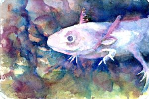 #waterfall The Axolotl is endangered because so much of Lake Xochimilco, and the other four lakes in
