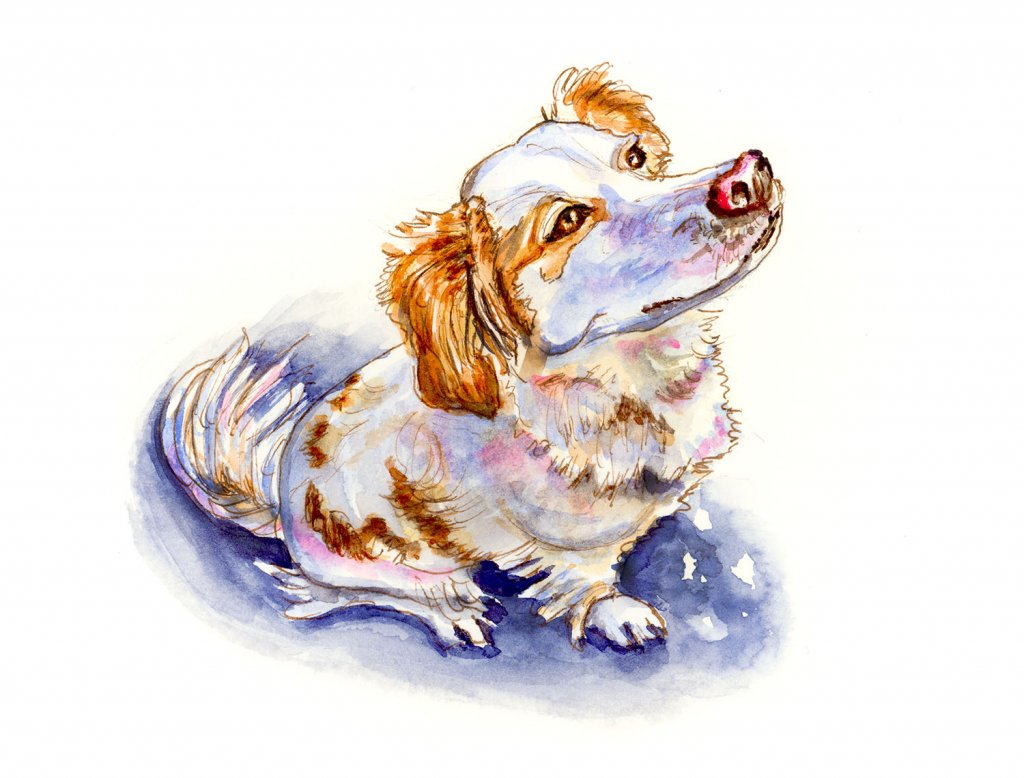 Dog Looking At Sky Watercolor Illustration