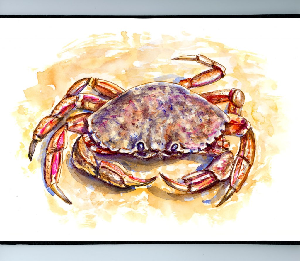 Crab On Beach Watercolor Illustration Sketchbook Detail
