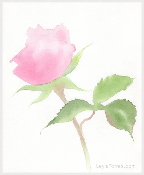 Rose in Watercolor Painting Step 2