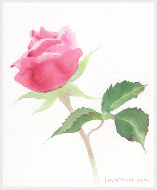 Rose in watercolor Painting Step 3