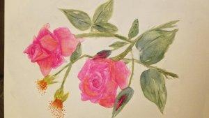 Still working on roses Roses
