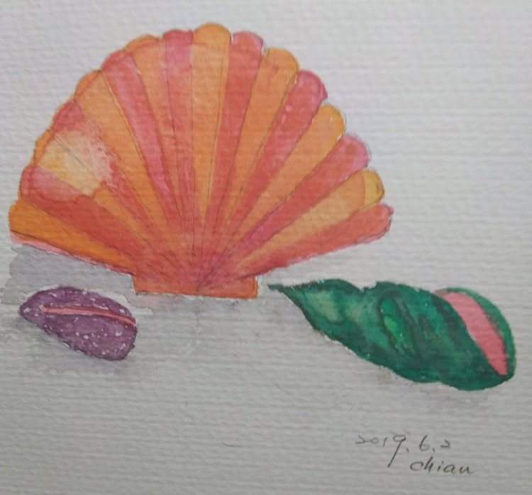 Seashells For 6/1 prompt image