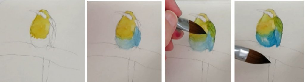 Bird Step By Step Watercolor Painting