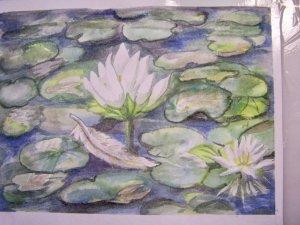 lily pond 101_5191
