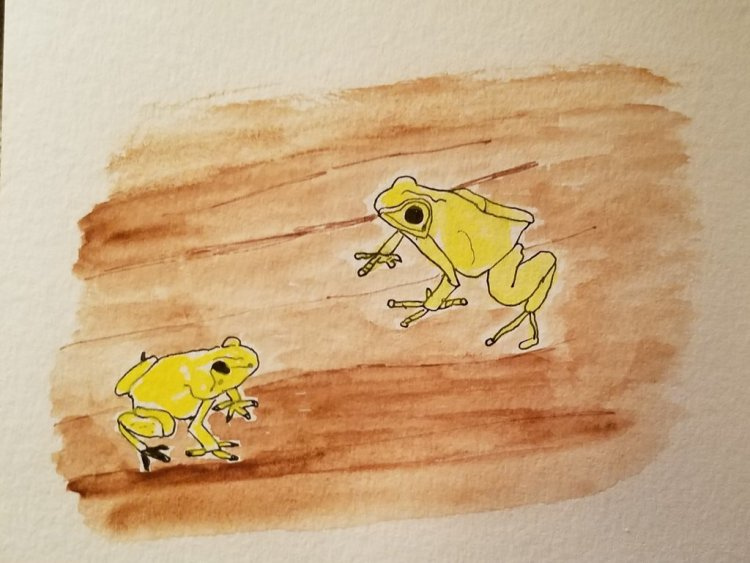 #WorldWatercolorMonth, #DoodlewashJuly2019 – rainforest. A couple of golden poison tree frogs