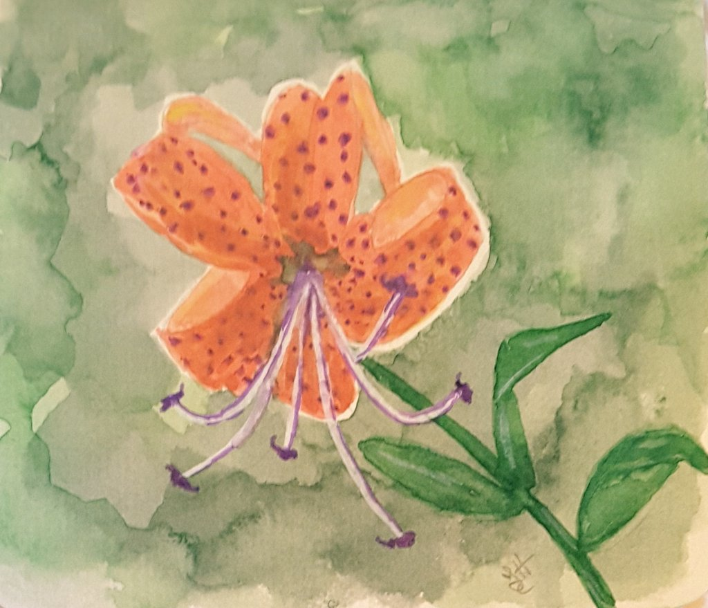 """Day 30 """"Wild things"""" Tiger Lily #WorldWatercolorMonth #WorldWatercolorGroup #SketchingSt"""