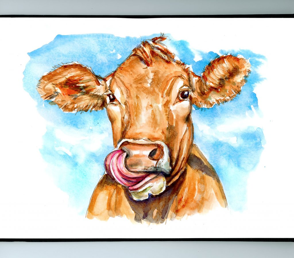 Cow Tongue In Nose Watercolor Illustration Sketchbook Detail