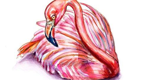 Flamingo Sitting Laying Down Watercolor Illustration