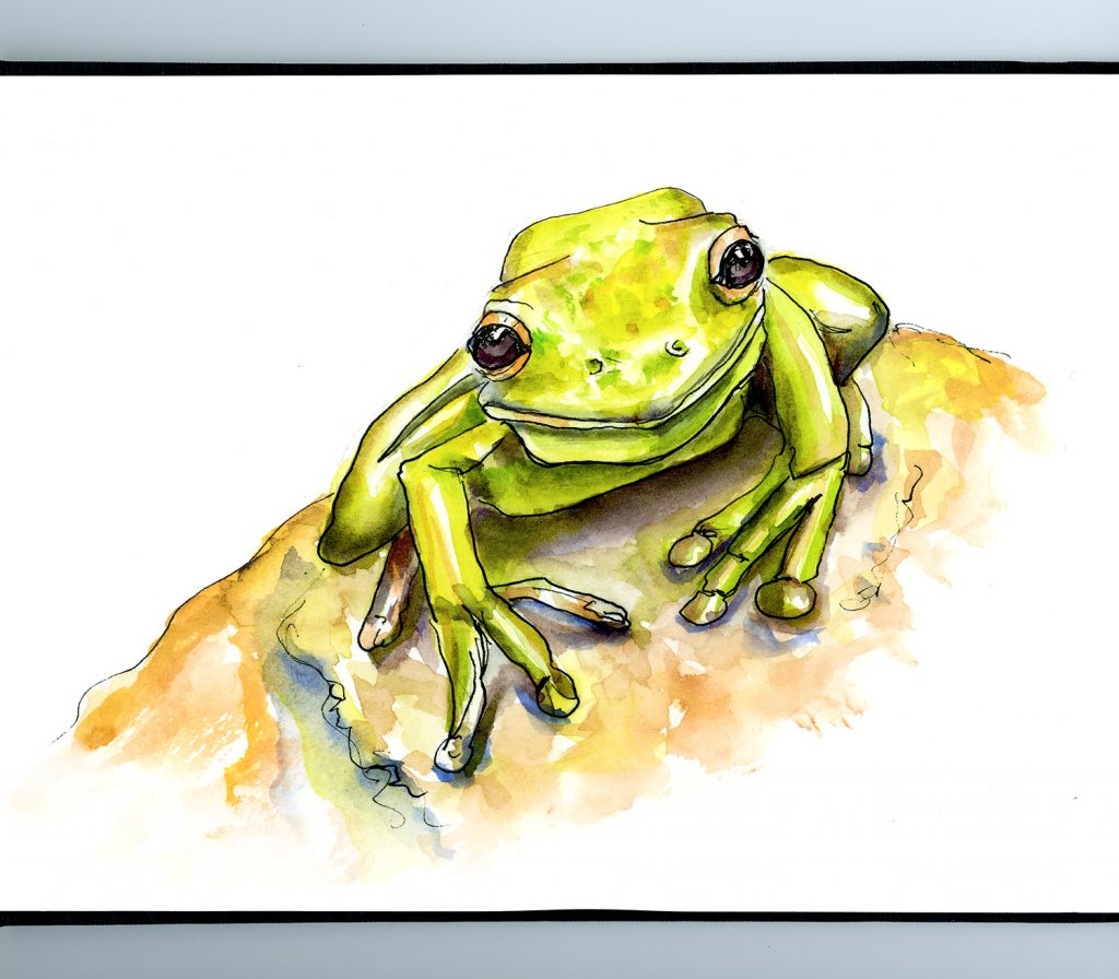 Cute Frog Watercolor Illustration Sketchbook Detail