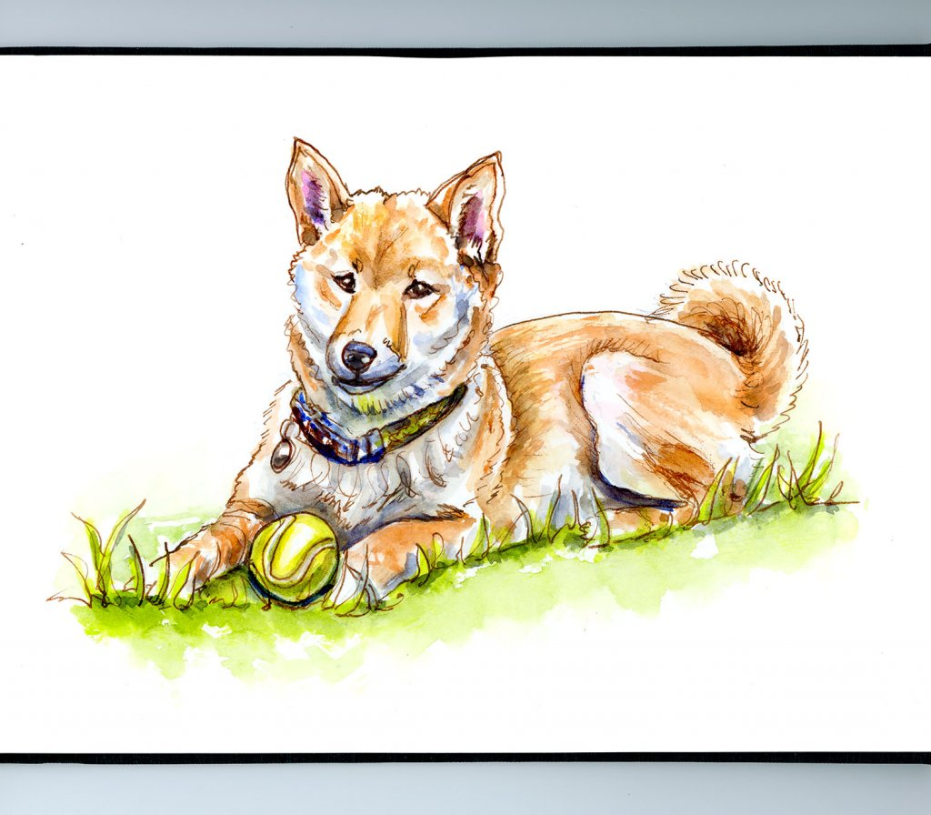 Shiba Inu Watercolor Illustration Sketchbook Detail