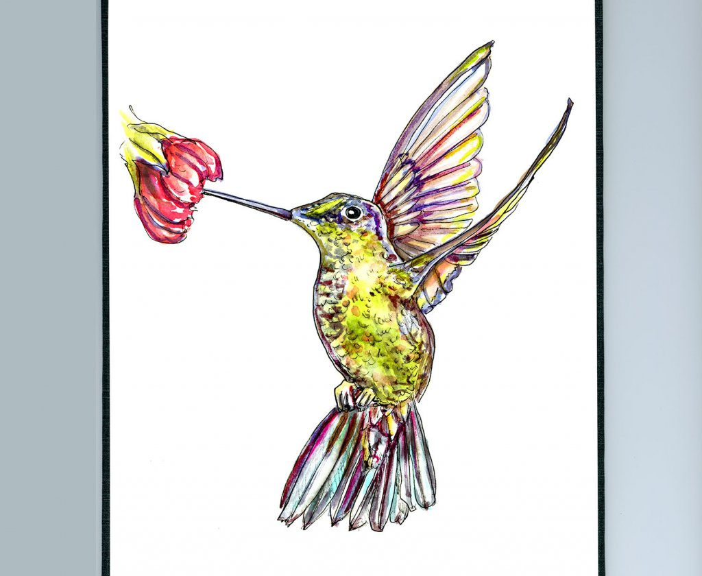 Hummingbird Wings Watercolor Illustration Sketchbook Detail