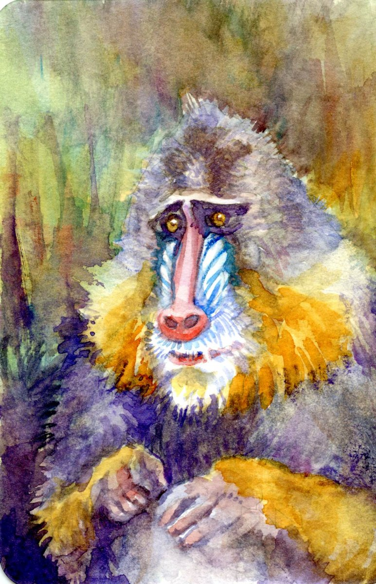 Watercolor painting of monkey by Sandra Strait
