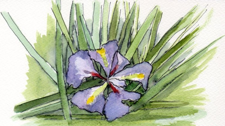 A wild orchid blossoming at present in my garden #WorldWatercolorMonth! day12