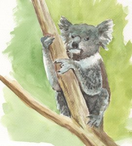 Based on my photo taken in Healesville animal park. He or she seemed a bit disconcerted – it w