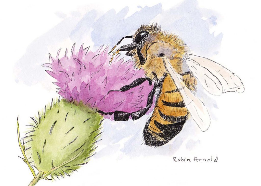 Honey Bee Watercolor by Robin Arnold