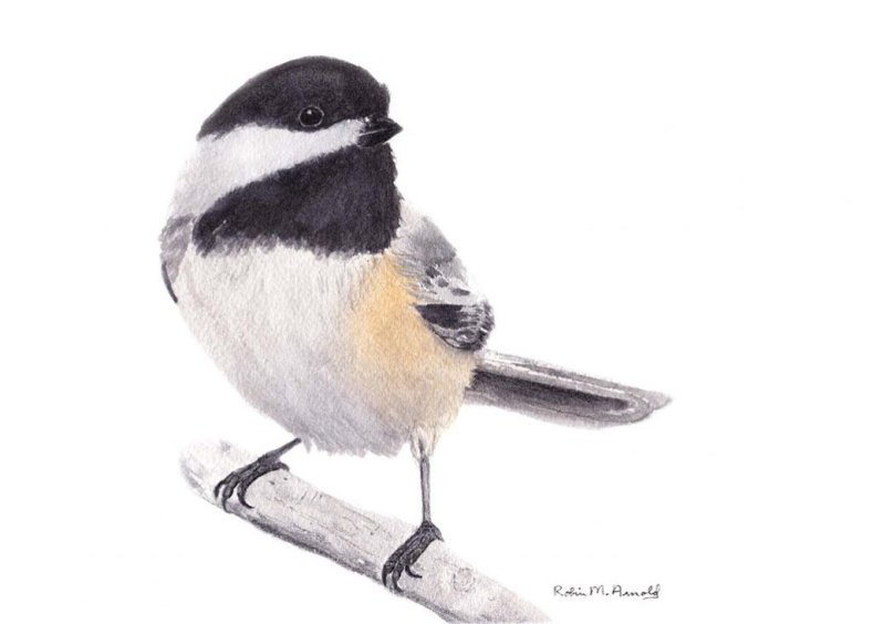 Small Bird Watercolor by Robin Arnold