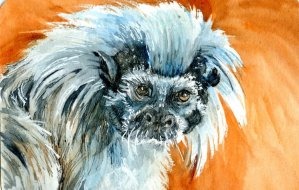 Cotton Top Tamarin-Zebra Zensations Technical Pen-QoR watercolor on Hahnemühle Cold Pressed Waterco
