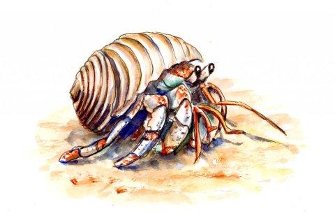 Hermit Crab Cute Watercolor Illustration