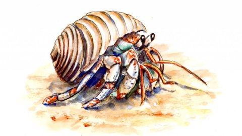 Hermit Crab Cute Watercolor Illustration