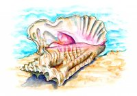 Conch Shell Beach Watercolor Illustration